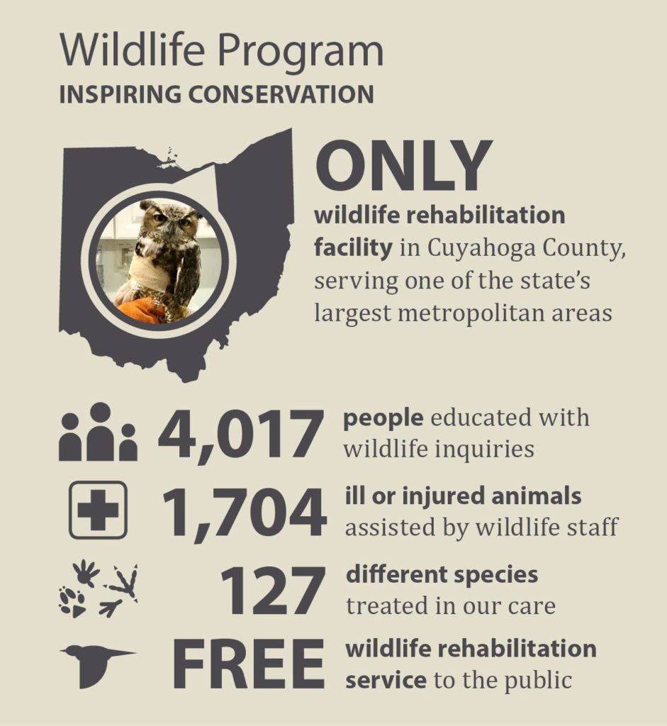 Only wildlife rehabilitation facility in Cuyahoga County