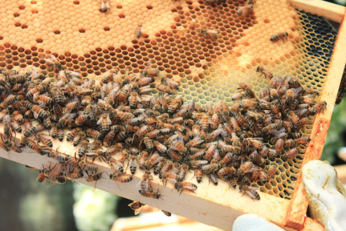 How do honey bees survive winter?