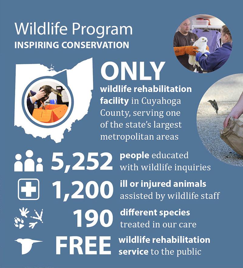 2019 Impact - wildlife