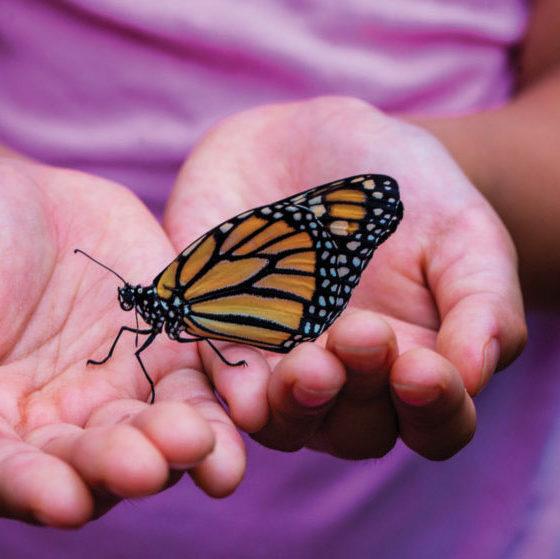 Monarch Butterfly in Hand